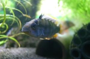 Aqua_20111016_02_2