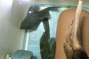 Aqua_20120329_01