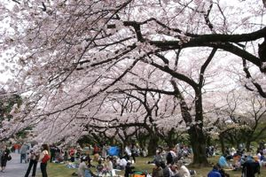 Sakura_2009_03