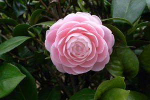 Sakura_2009_06