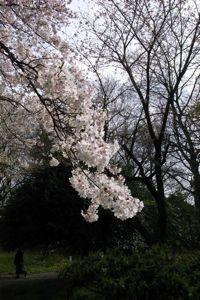 Sakura_2009_09