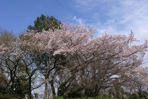 Sakura_2009_10