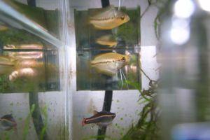 Aqua_20100109_04
