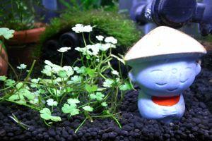 Aqua_20100130_03