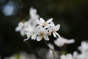 Sakura_201004_001