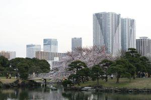 Sakura_201004_003