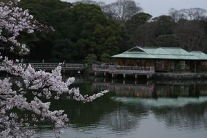 Sakura_201004_007