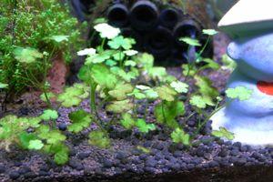 Aqua_2010_0516_4