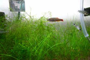 Aqua_20100717_6