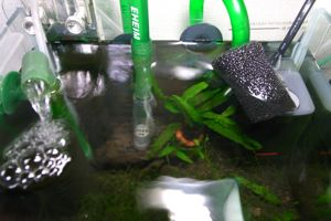 Aqua_20100822_01
