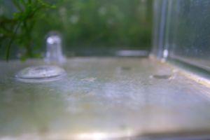 Aqua_20100822_03