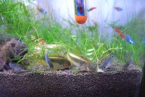 Aqua_20100822_04