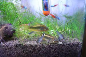 Aqua_20100822_05