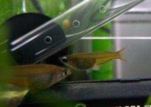 Aqua_20101023_01