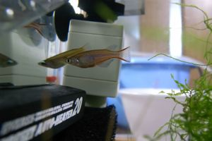 Aqua_20101023_02