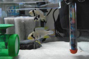 Aqua_20110305_03