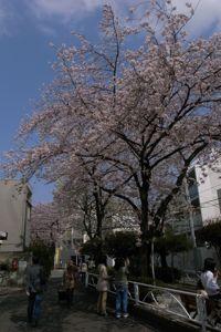 Sakura_2011_01