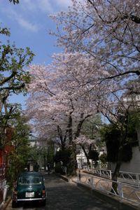 Sakura_2011_02
