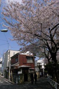 Sakura_2011_04