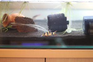 Aqua_20110703_06