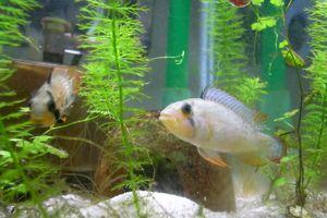 Aqua_20110806_005