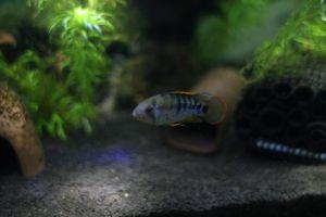 Aqua_20111204_03