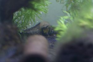 Aqua_20111204_04