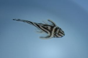 Aqua_20111223_01