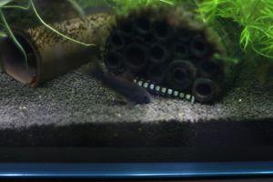 Aqua_20111223_05