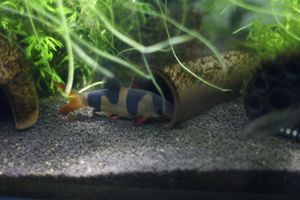 Aqua_20111223_06