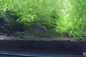 Aqua_20111223_07