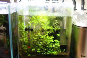 Aqua_20111223_08