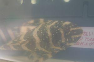 Aqua_20120116_02