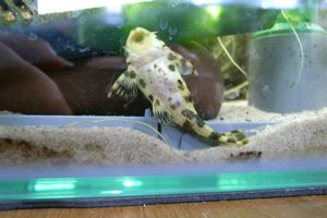 Aqua_20120205_001