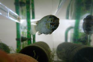 Aqua_20120205_006