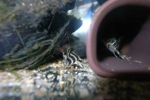 Aqua_20120205_009