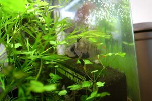 Aqua_20120205_010
