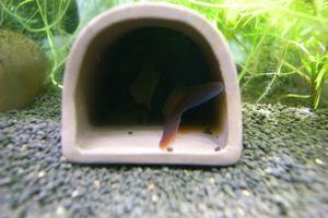 Aqua_20120205_012