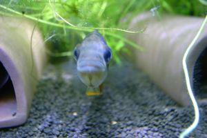 Aqua_20120205_013