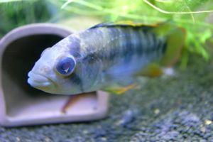 Aqua_20120205_014