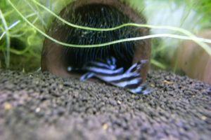 Aqua_20120205_015