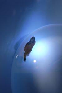 Aqua_20120205_016