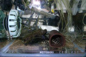 Aqua_20120211_004