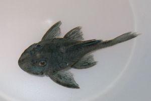 Aqua_20120211_011