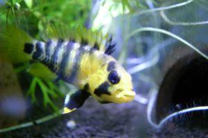 Aqua_20120219_001