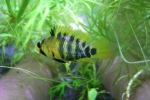 Aqua_20120219_002