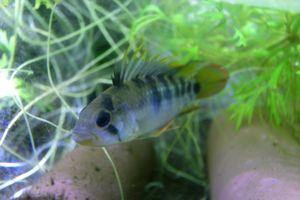 Aqua_20120219_003