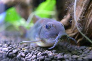 Aqua_20120219_004