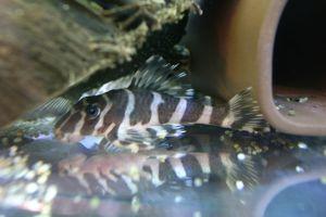 Aqua_20120219_005