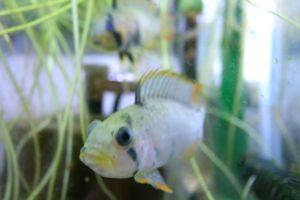 Aqua_20120219_007